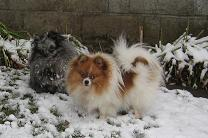 photo of the poms in snow