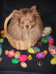 photo of Mojo in the Easter Basket