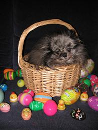 photo of Ouija in the Easter Basket