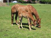 photo of filly now 29 days old