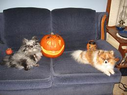photo of poms with Kevin's Jack O'Lantern